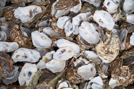 Oyster shells as a top view background. Close up