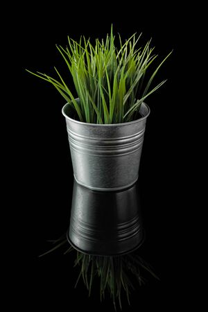 Green grass in a metal pot on a isolated black background.