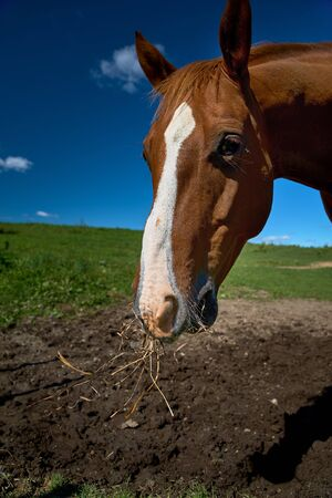 Close up portrait of a horse looking straight into the camera against a blue sky.