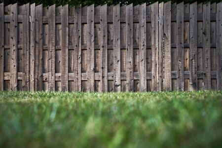 green lawn and wooden fence in the background. selective focus..