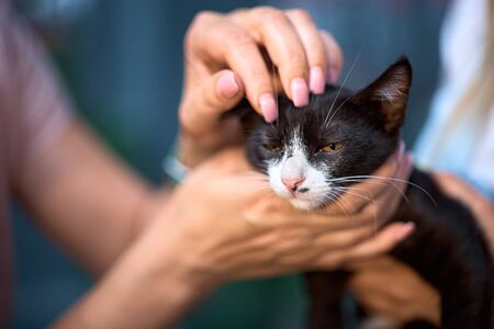 Homeless animals. thrown cat on the hand, looking at the camera. Animal welfare in a homeless shelter. Low key, toned photo. Stock Photo