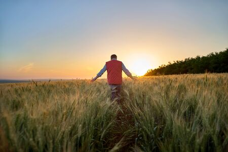 Male hand moving over wheat growing on the field. Field of ripe grain and man's hand touching wheat in summer field. Man walking through wheat field, touching wheat spikes at sunset.