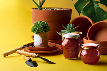 Plant for decoration in a pot. clay pots in assortment for gardening on a yellow background Banque d'images