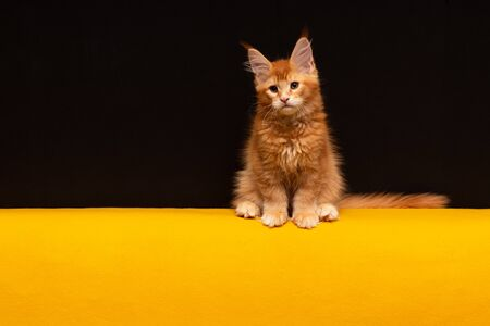 Kitten on a black and yellow
