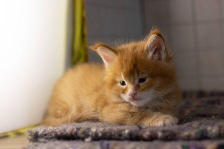 Charming beautiful cat