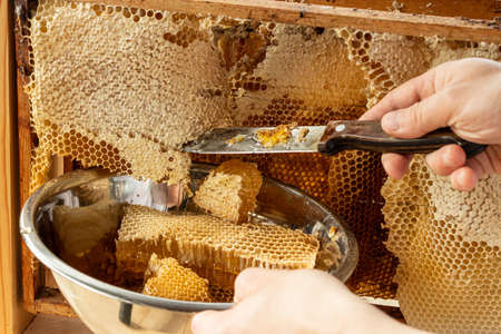 The beekeeper cuts off the honeycomb with honey. In the hand of a knife in wax and liquid sweet honey. The bowl contains a honeycomb with nectar. The celebration of the national day of the honey bee.