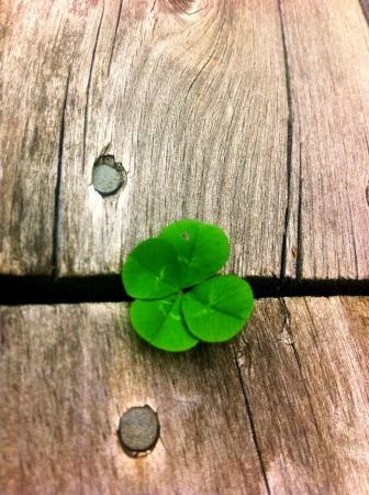 buena suerte: Tr�bol verde con cuatro hojas de la buena suerte
