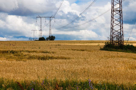 High voltage power line pylons stand among a field of ripe wheat
