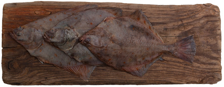 plaice: flounder fishes cold wooden table background top view