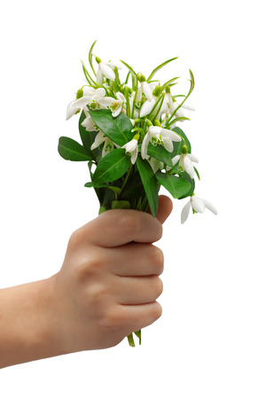 eights: snowdrops bunch  holding hand greeting isolated white
