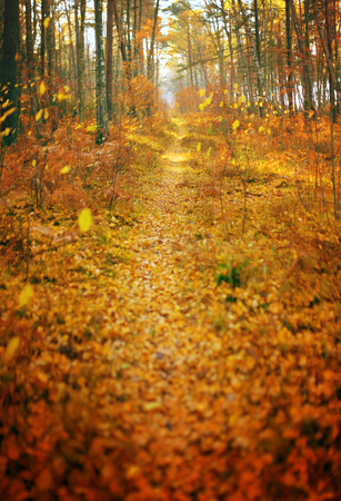 fall season autumn park path abstract background vertical panorama shallow depth of field filter
