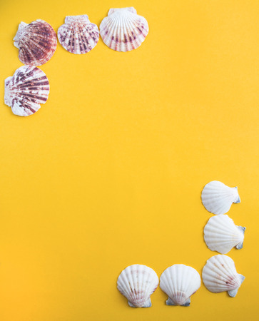 Seashells in the corners of the yellow background like a beach