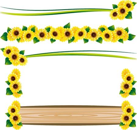 sunflower: Set of the frame of the sunflower