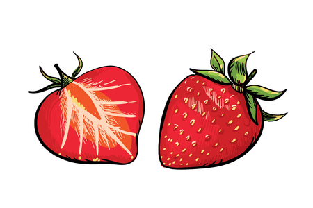 Handdrawn red strawberry and a half of strawberry Illustration