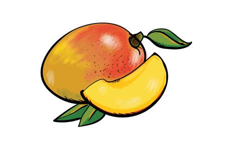 Handdrawn fresh mango fruit, peace of mango