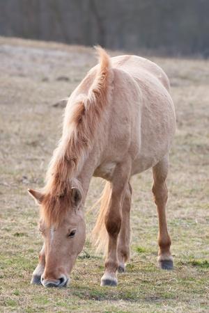 nibbling: Horse nibbling in meadow