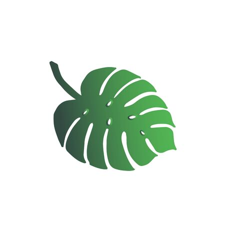 Stylish tropic monstera leaf - green gradient design closeup isolated.