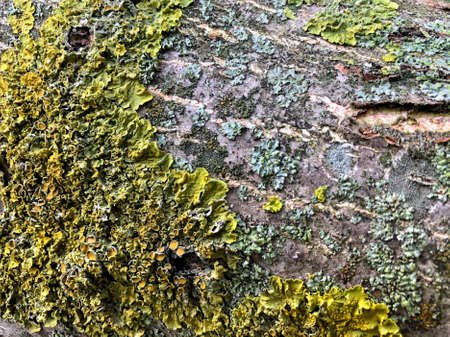 digitally altered seamless texture mossy bark on rain forest tree background / Wood and moss texture. Old moss on the bark of a tree close-up