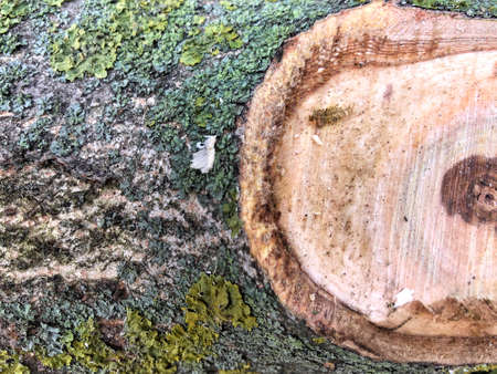 Moss and mold affect a wood panel. Wood and moss texture. Old moss on the bark of a tree close-up
