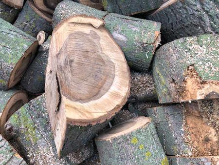stack of wood logs background. Saw cut of a nut tree. Zdjęcie Seryjne