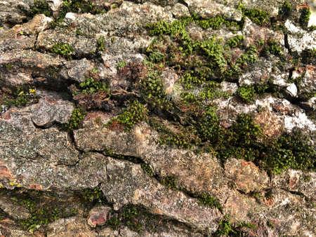 Texture of tree bark and moss closeup. Moss background Zdjęcie Seryjne