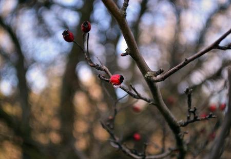 berry: berry Stock Photo