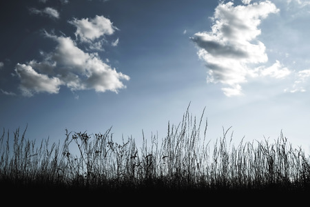 Grass silhouettes against blue sky Фото со стока