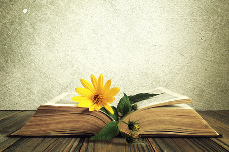 Yellow flower on the opened old book with textured background