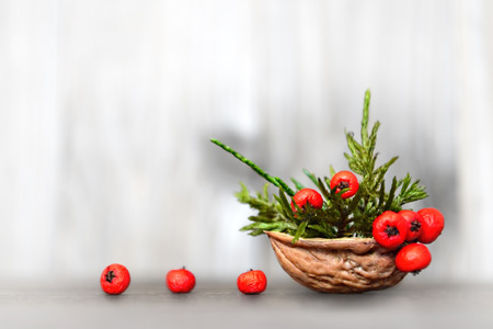 nut shell: Natural Christmas decoration: Arrangement in nut shell