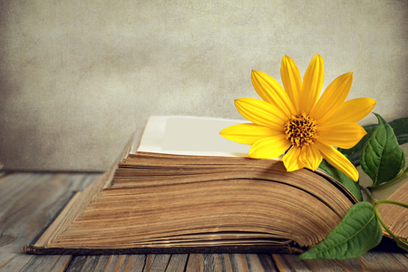 Opened old book and yellow flower