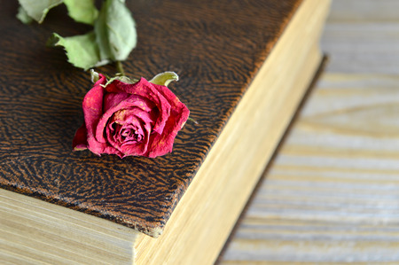 closed book: Closed book and dry rose Stock Photo