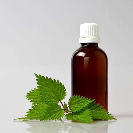 stinging  nettle: Stinging nettle essential oil