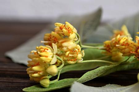 tilo: flores de tilo en el fondo de madera