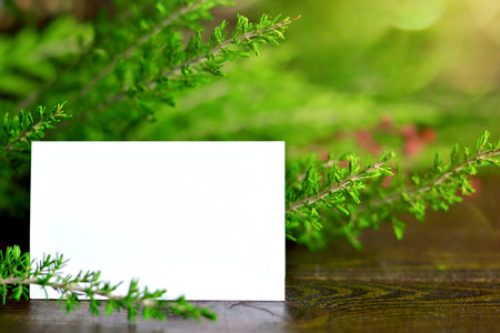 Blank Christmas card, blurred Christmas tree branches in background Stock Photo
