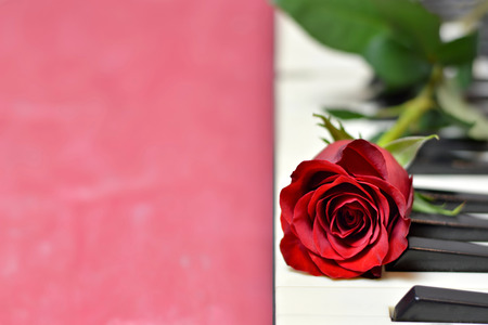 Red rose and piano keys on pink background