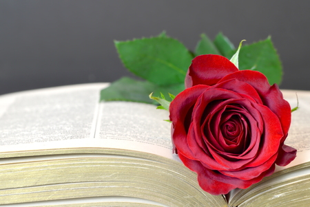 Mothers Day card with red rose on the book Stock Photo - 69022889
