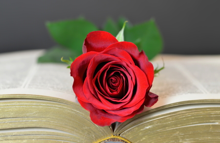 Valentines Day rose on the opened book Stock Photo