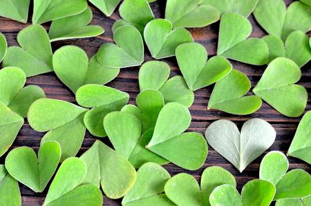 false shamrock: Valentines Day background: Heart shaped leaves on wooden background