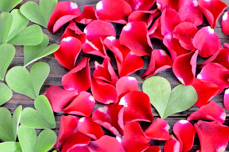 false shamrock: Valentines Day background: Heart shaped leaves and red rose petals on wooden background