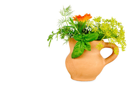 pot marigold: Herbs isolated on white background