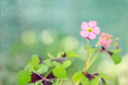 Moedersdagkaart met roze bloem op grungeachtergrond
