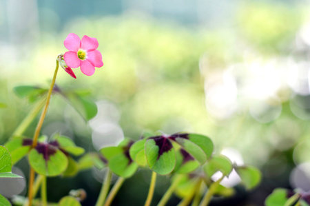 fourleaved: Pink flower on blurred background Stock Photo