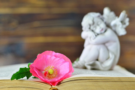 Flower and angel in background