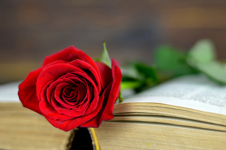 Valentines Day rose on old book Stock Photo - 83656255