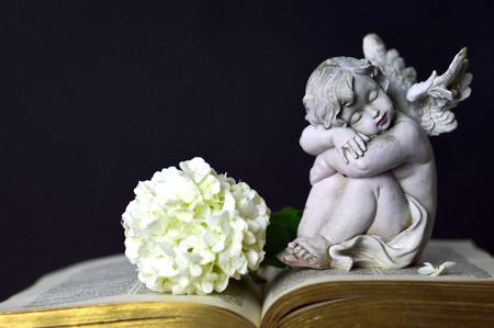 Engel en witte bloem Stockfoto