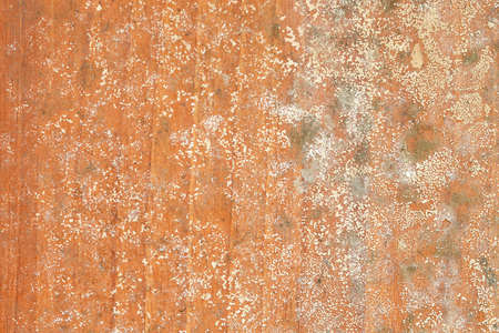 Mold on wooden background