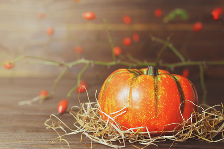 Autumn pumpkin and rose hip branch Standard-Bild