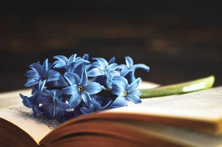 Book and flower on dark background