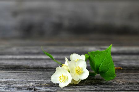 Close up of jasmine flower on wooden background