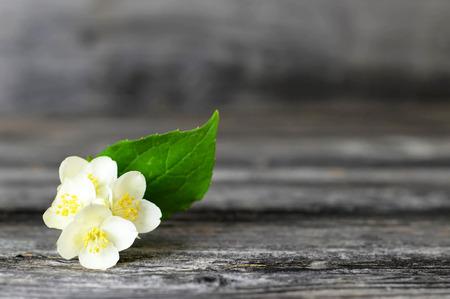 Jasmine flower on wooden background Imagens